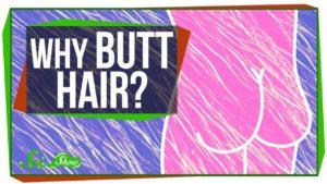Warum wachsen uns Haare am Arsch?