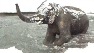 Hur söt spela djur från zoo i Oregon i snön