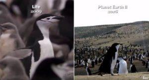 """Wie die BBC """"Planet Erde"""" som en Hollywood-film kan se"""