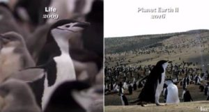 "Wie die BBC ""Planet Erde"" gibi bir Hollywood filmi bakabilirsiniz"