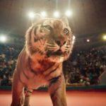 Bloedige chaos in het Russisch circus als een muziek video