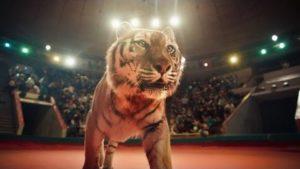 Blutiges Chaos in russischem Zirkus als Musikvideo