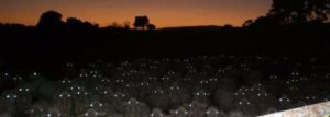 Sheep can be so creepy