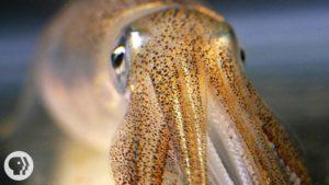Das sind keine Halluzination, dass ist die Haut eines Tintenfischs