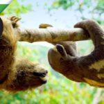 Lenistwo robota w rzeczywistych leniwce