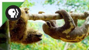 Laiskuus robotin real sloths