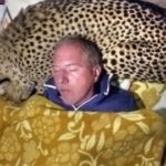 Sleeping with gepard