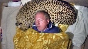 Bir çita ile Sleeping