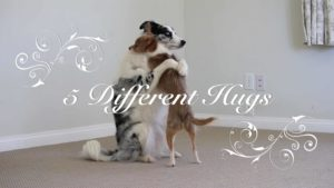 Valentine's Day: 5 different types of hugs, presented by dogs
