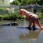 As a T-Rex in disguise fool teases big Alligator