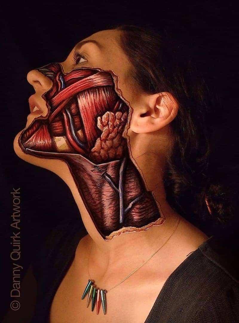 Realistische anatomische Malereien zeigen die Strukturen, die unter ...