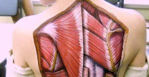 Realistiske anatomiske malerier viser strukturerne, som er under huden