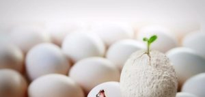 Reborn: En anläggning i ägg som pånyttfödd Pet