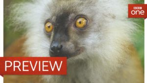 Lorsque enivré lémurs au don de scolopendres