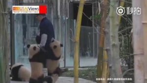 Attacke der Pandas