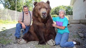 Beast Buddies: Mit Bären zusammenleben