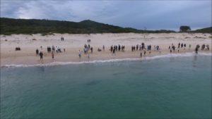 Drohnenaufnahmen von Haien auf Beutejagd