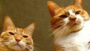 Katzen sind böse