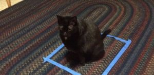 Mit Klebeband ein Viereck auf den Boden geklebt, schwupps, schon sitzt die Katze drin