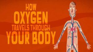 Wie Sauerstoff unseren Körper durchläuft