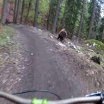 Bear chasing cyclists