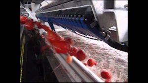 Die Präzision einer Tomaten-Sortiermaschine