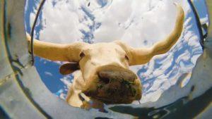 Wenn Tiere Wasser saufen, aus der Sicht eines Eimers