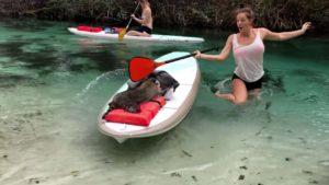 Waschbär versucht Frau auf Paddleboard zu berauben