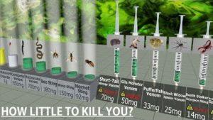 Tödliche Dosen im Vergleich: Ab dieser Menge wirds gifitg