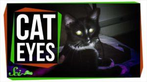 Hvorfor lys katteøjne i mørke?