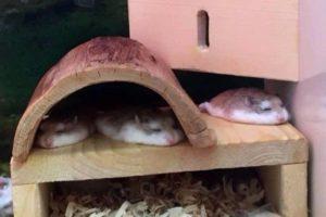 Montag, bei grosser Hitze, schmelzen selbst Hamster