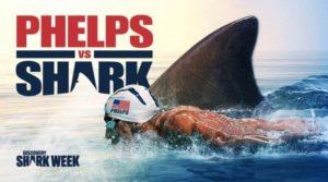 concurso de natação: Michael Phelps contra um grande tubarão branco