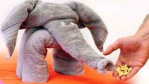 Wie man aus einem Handtuch einen Elefanten faltet