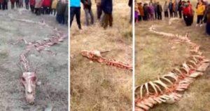 löysi salaperäinen luuranko lohikäärme Kiinassa