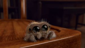 Lucas, die niedliche Spinne