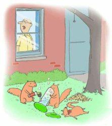 Wenn Eichhörnchen mit der Vogelfutterstation spielen