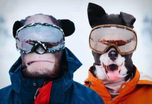 Tierisch geniale Skimasken