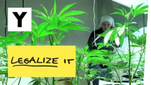 Legalize it - Das neue Geschäft mit Marihuana in Kalifornien