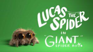 Lucas the Spider: Die niedlichste Spinne der Welt ganz gross