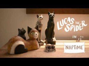 Lucas the Spider: Die niedlichste Spinne der Welt macht ein Nickerchen