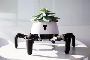 Roboter folgt für seine Pflanze automatisch dem Sonnenlicht