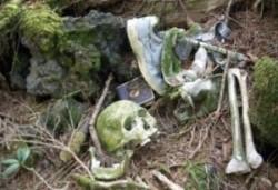 Aokigahara Jukai - Der Selbstmord Wald