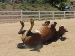 Ein furzendes Pferd
