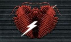 Rock Fossils - Ja, es ist Liebe!