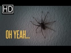 Spinnen in der Wohnung
