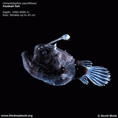 Lebewesen Der Tiefsee